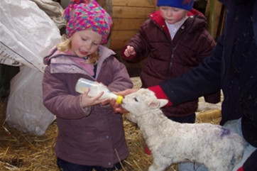 Children are welcome to visit and help with farm animals, under supervision; feeding the lambs is a very popular activity!