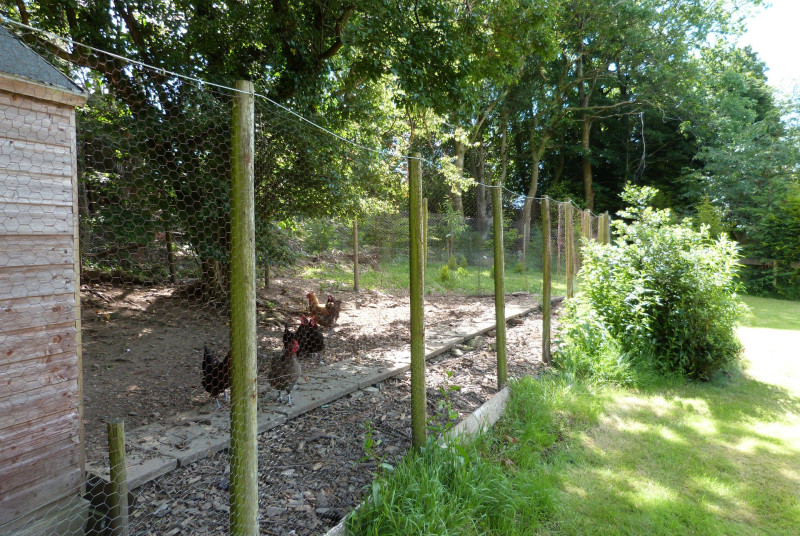 Great for children - meet the hens at the far end of the garden